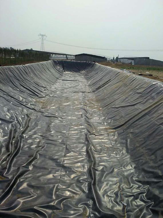 养殖厂废液防渗池案例
