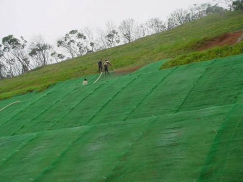 三维植被网施工现场